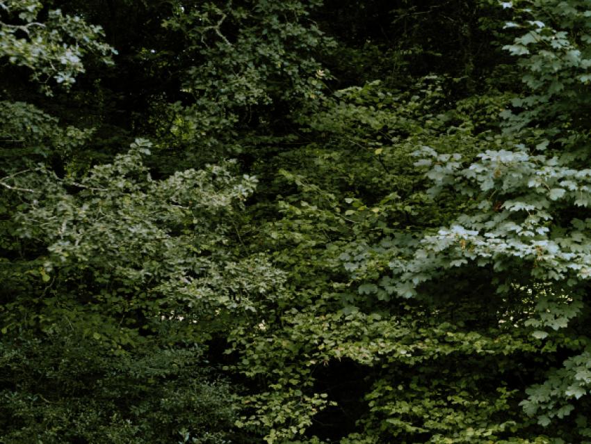 Les Faiseurs de paysage, 48_722256_-3_443924, 2021 - © © Lise Gaudaire