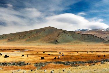 Mongolie :