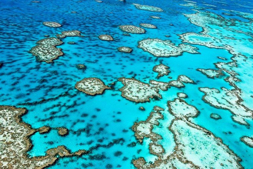 La grande barrière de corail dans le Queensland.