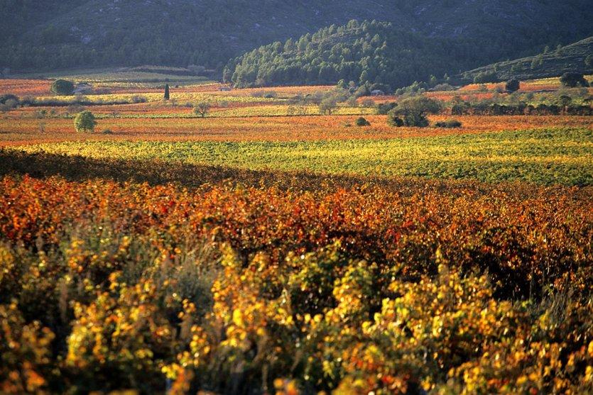 Automne Vignoble Corbières Minervois - © Gilles Deschamps