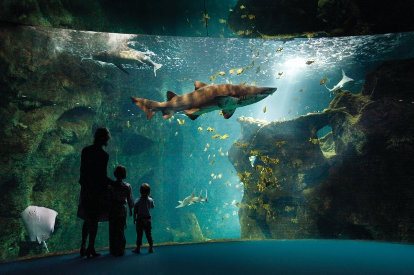 - © Aquarium La Rochelle