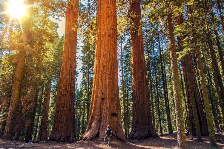 Sequoia National Park - © welcomia - Shutterstock.com