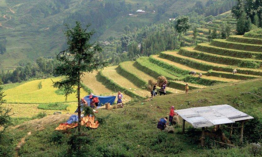 Chemins de traverse au Viêt Nam