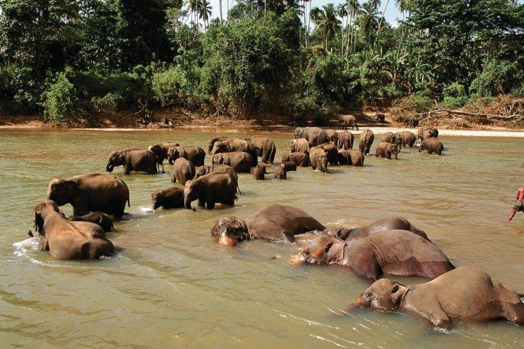 Orphelinat des éléphants - © Author's Image