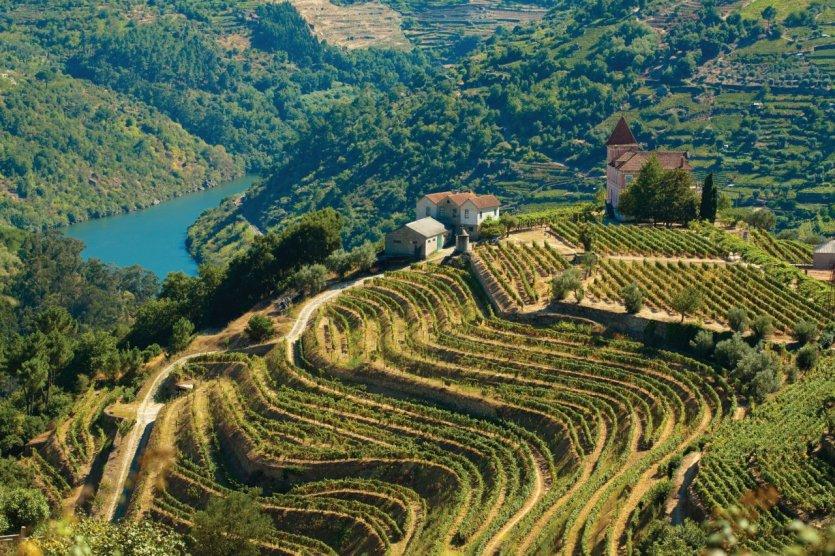 Vignoble de la vallée du Douro. - © PRG-Estudio - iStockphoto