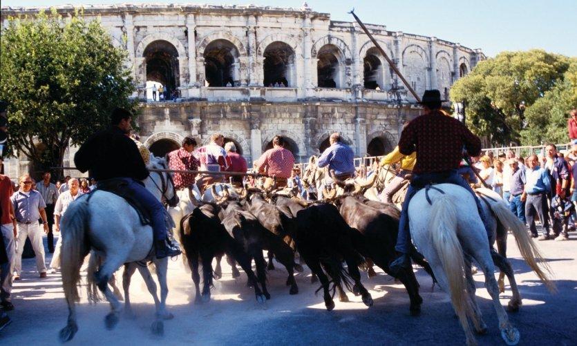 Nîmes, à l'heure de sa feria de Pentecôte