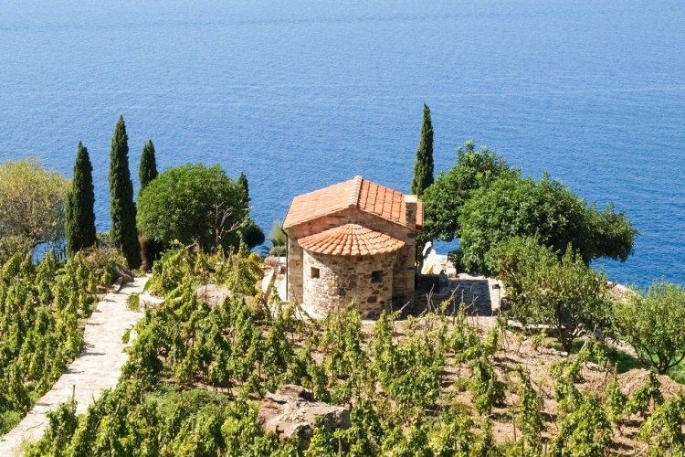 Vignes de Campo Fenno, près de Marciana. - © Mor65_Mauro Piccardi - Shutterstock.com