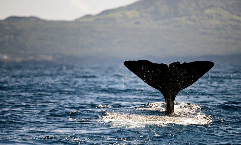 Les incontournables des Açores