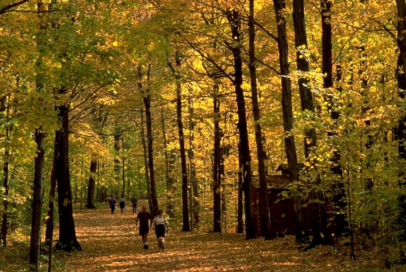 Arboretum Morgan, Montréal. - © Arboretum Morgan