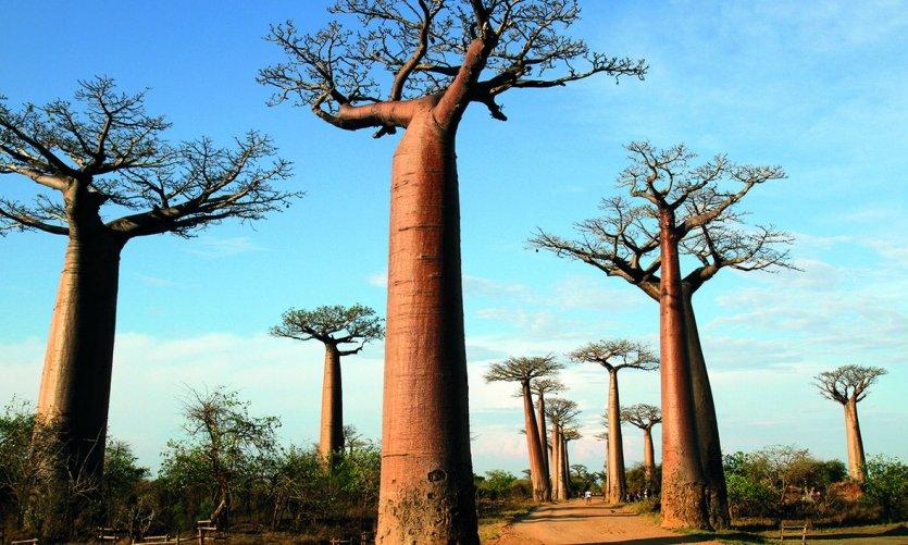 10 raisons de découvrir Madagascar