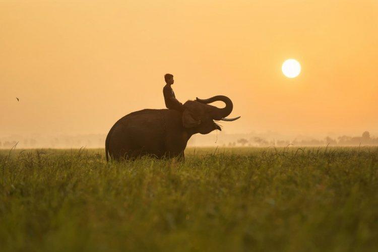 - © Suriya99 - Shutterstock.com