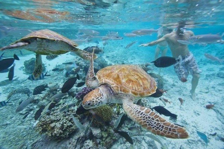 Tahiti - © Salon de la plongée