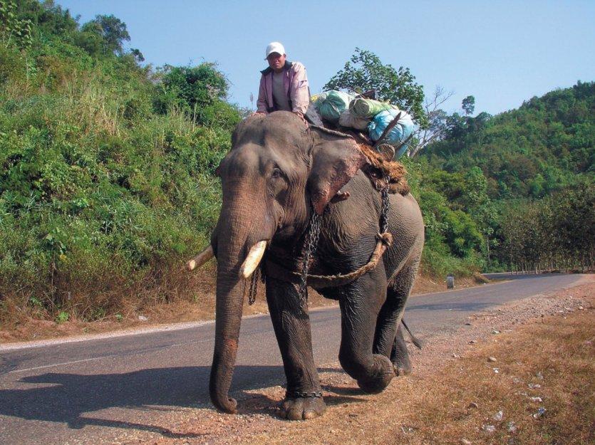 Éléphant et son cornac entre Vang Vieng et Vientiane. - © Fabrice BRESSON