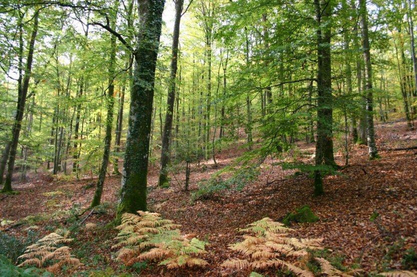 Forêt de Perseigne. - © Parc naturel régional Normandie-Maine