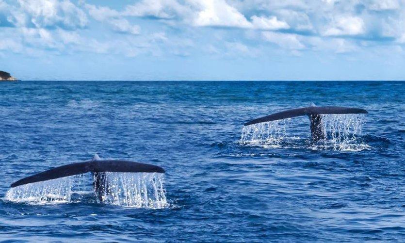 Baleines Panama