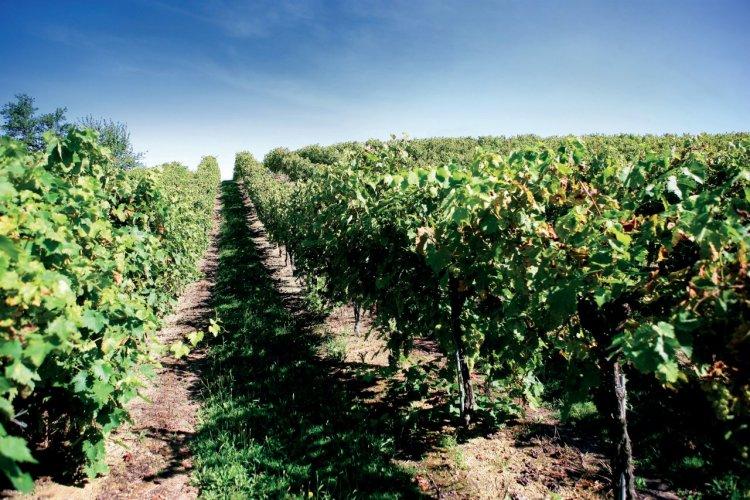 Vignoble de Gascogne - © PHOVOIR