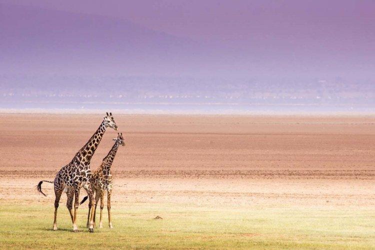 - © Curioso - Shutterstock.com