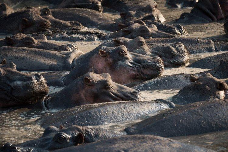 Le parc national de Katavi - © Palo Gajdos - Shutterstock.com