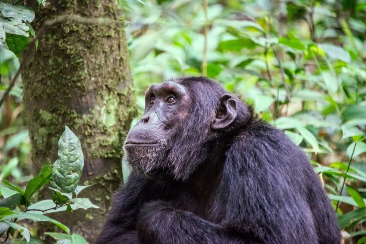 Le parc national de Gombe Stream - © MOIZ - stock.adobe.com