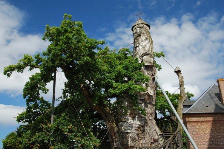 Le chêne d'Allouville - © Ariane Citron - stock.adobe.com