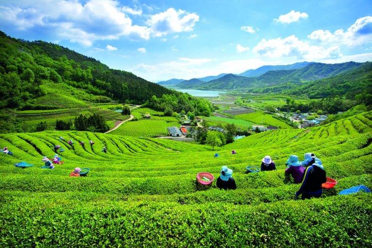 - © KOREA TOURISM ORGANIZATION