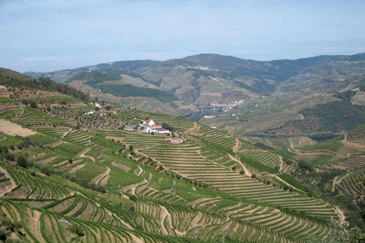 Vignes dans la vallée du Douro - © Maria SOBRAL