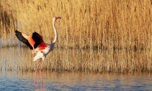 L'étang de Vaccarès, Camargue- © kanadel - stock.adobe.com