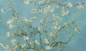 Amandiers en fleurs- © Vincent Van Gogh