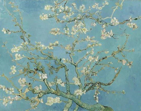 Amandiers en fleurs - © Vincent Van Gogh