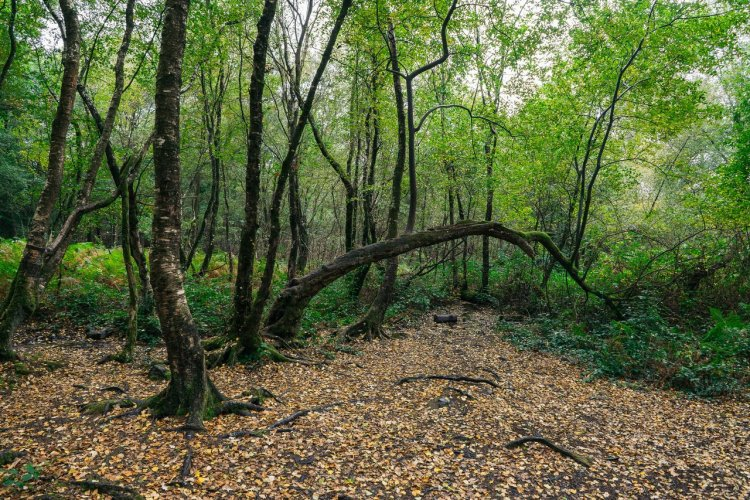 La forêt de Brocéliande - © Huang Zheng
