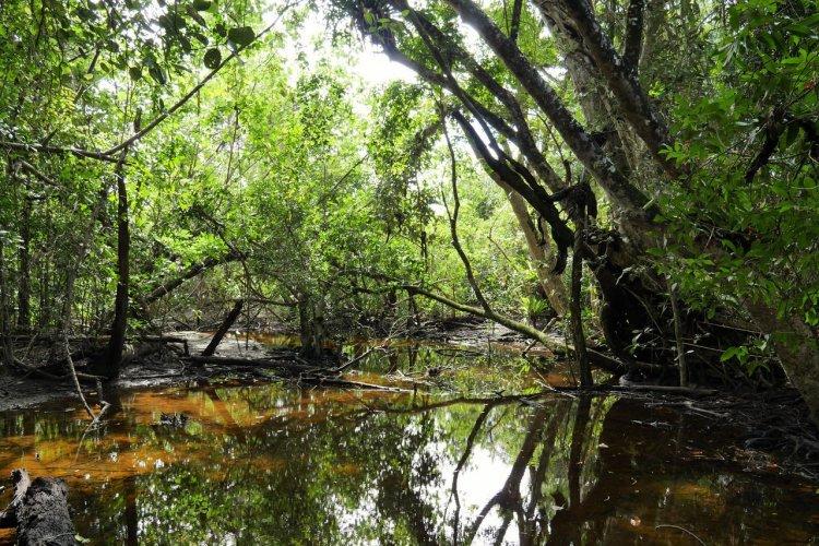 Daintree National Park - © specialscenesandmoments