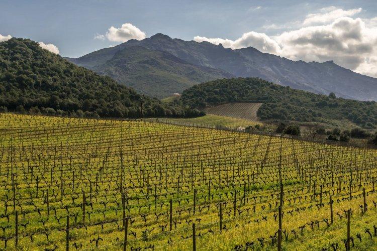 Vignobles de Patrimonio - © joningall1 - stock.adobe.com