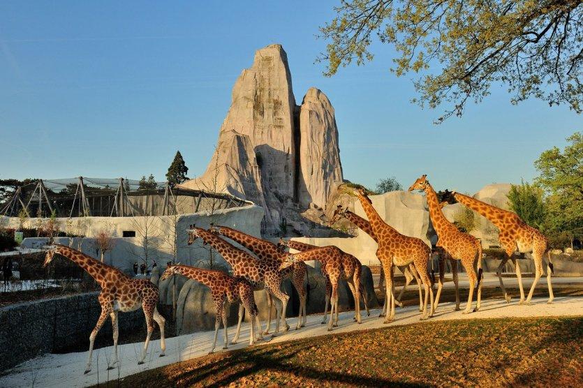 - © G. Grandin / Parc Zoologique de Paris