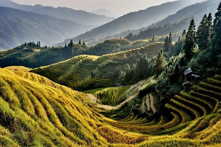 - © ostill - Shutterstock.com