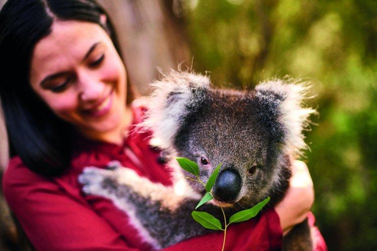 - © South Australian Tourism Commission