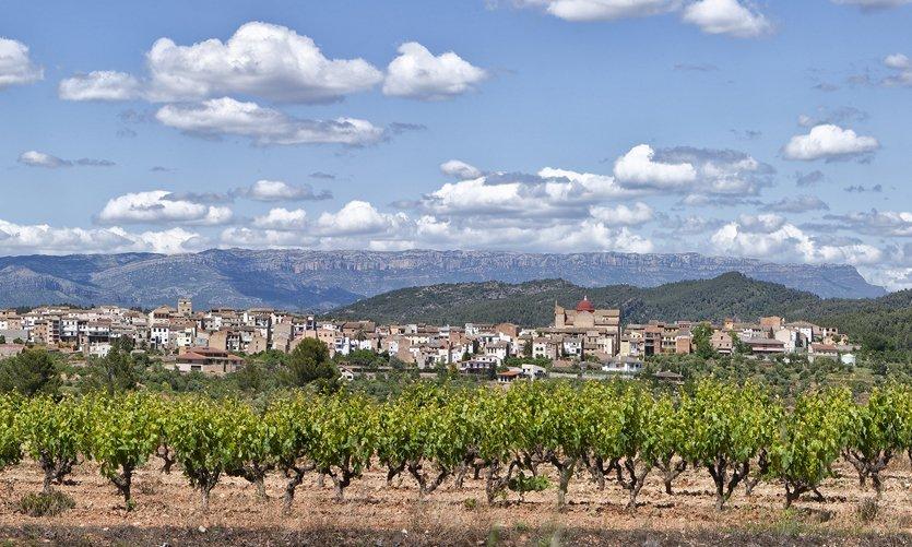El Masroig. Paisaje de viña - © Joan Capdevila