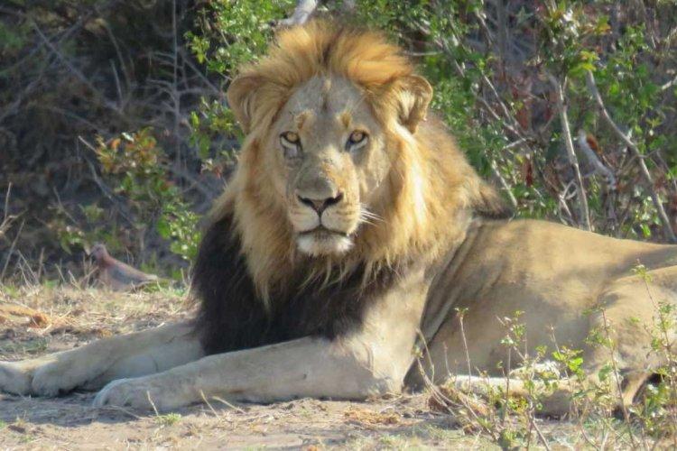 Kruger Park - © Mussiro Trips