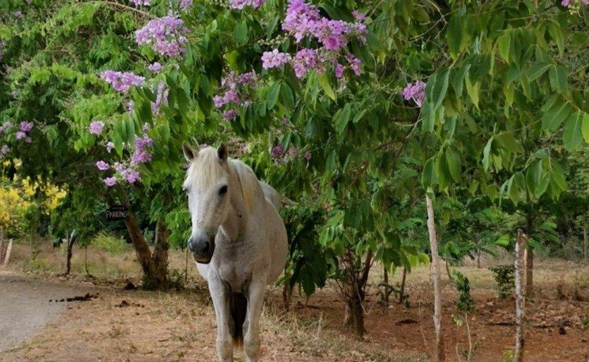 - © Horse Jungle - Costa Rica