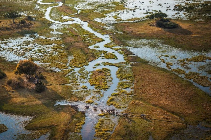 Delta de l'Okavango - © Damarana