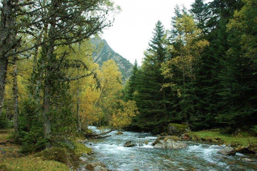 Parc Natural Alt Pirineu. Arxiu Parc Natural - © DR