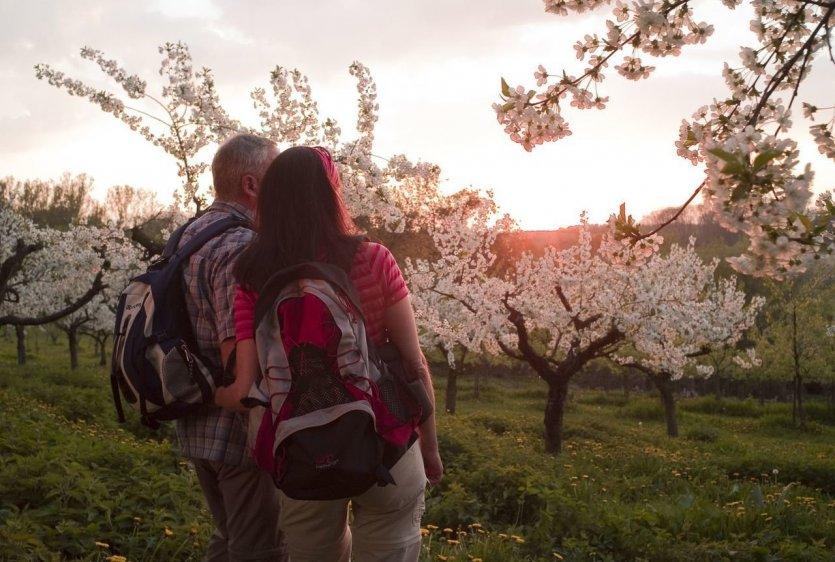 Réveil printanier quand les arbres fruitiers sont en fleurs ! Des vues panoramiques fabuleuses et un guidage routier divertissant inspirent toute l'année. Des stations d'aventure passionnantes complètent le chemin de rêve. Points forts du sentier de randonnée :  Arbres fruitiers, prairies et fruits oubliés depuis longtemps. Vues fabuleuses sur le Vulkaneifel, panorama sur la vallée du Rhin sur tout le bassin de Neuwied et loin dans le Westerwald. - © Klaus-Peter Kappest, Rhein-Mosel-Eifel-Touristik