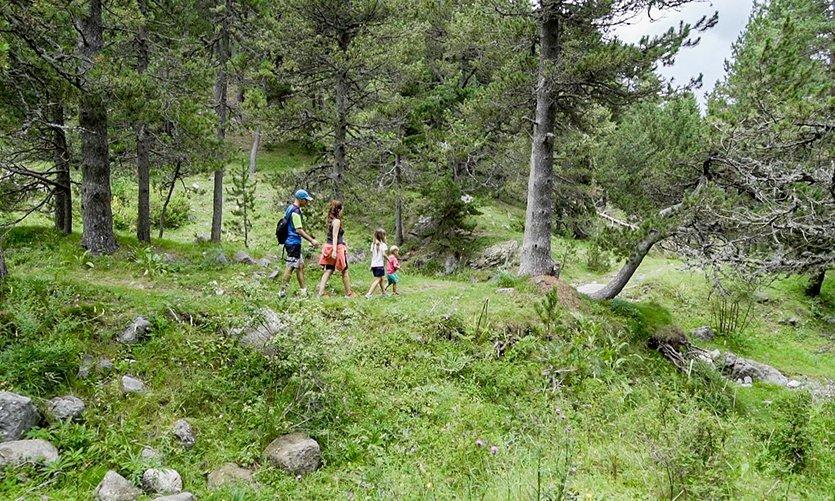 Excursion dans les fôrets de La Molina - © Pixion (FGC)