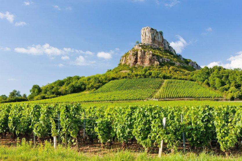 Au coeur des vignobles de Bourgogne - © phbcz - iStockphoto.com
