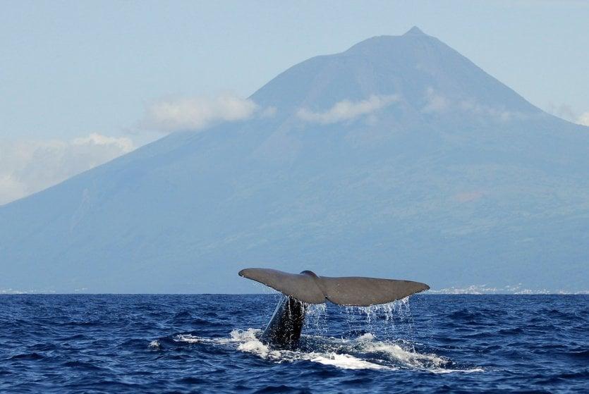 - © Visit Azores