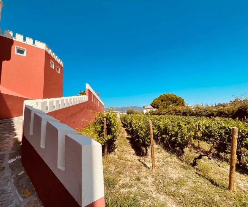 Vue sur les vignes du château de Crémat - © Isabelle DREZEN