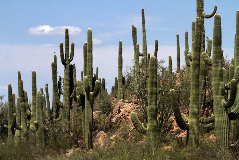 Saguaro National Park - © Stéphan SZEREMETA