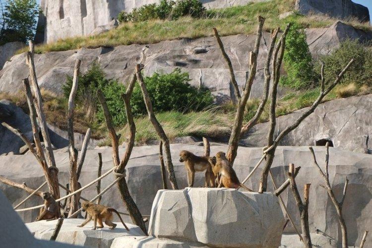 Babouins - © Alexandra Botzke