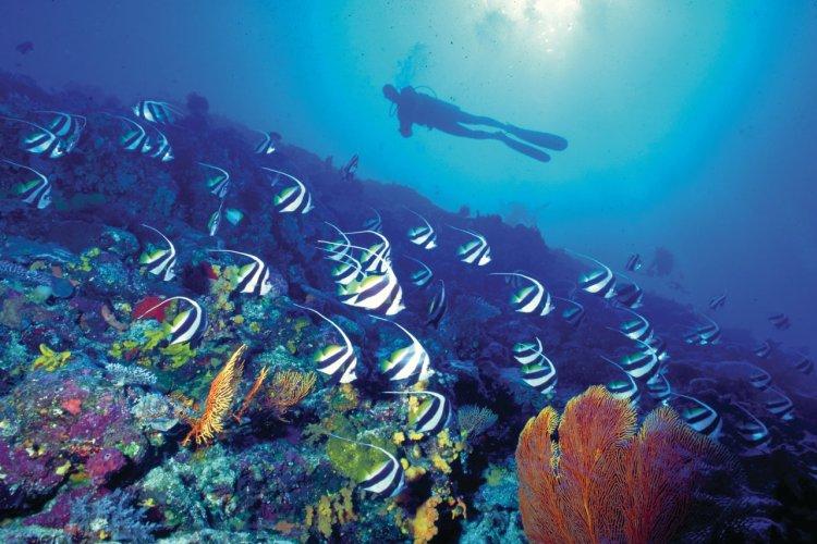 Plongeur dans les fonds marins. - © Tourism Fiji
