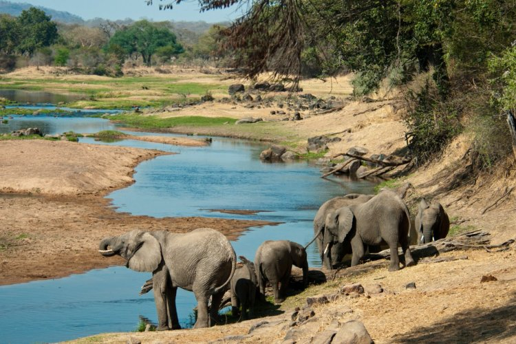 Éléphants du parc national de Ruaha. - © Andrew Molinaro / Shutterstock.com