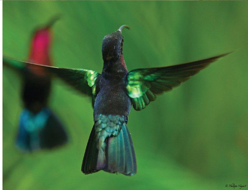 - © Au jardin des colibris